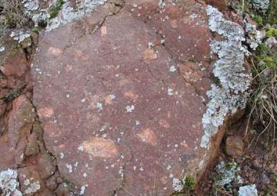 Filon de granite - Barre-des-Cévennes - Le filon de granite contient des cristaux de feldspaths rectangulaires blancs de taille centimétrique