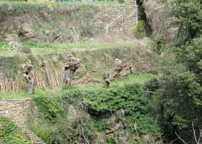 Les trencats recueillent les eaux de pluies afin de protéger les terrasses.