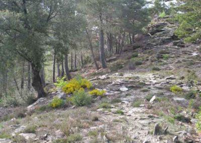 Les tumulus du sentier des rocs de Galta - Saint-Germain-de-Calberte.