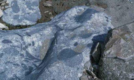 500 millions d'années d'histoire en Cévennes