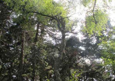 Arboretum de l'Hort-de-Dieu