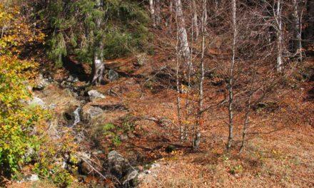 L'Aigoual… Une forêt à l'histoire remarquable
