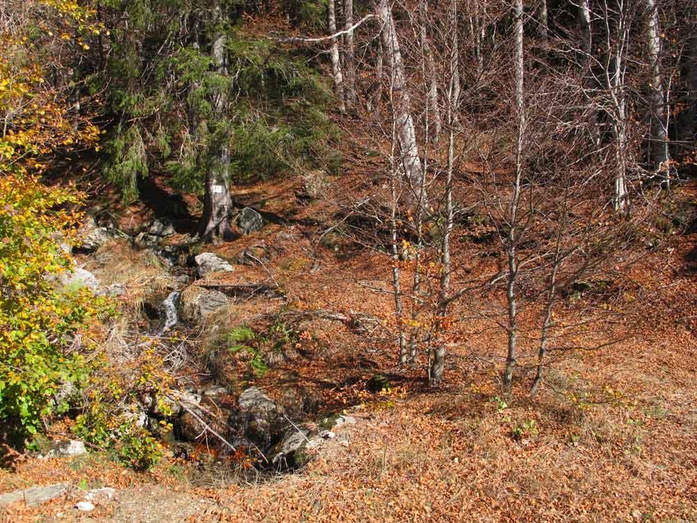 Forêt de l'Hort-de-Dieu