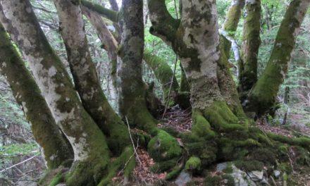 La vie des arbres