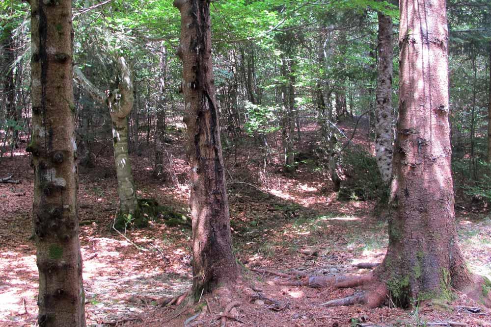 La forêt de Trévezel
