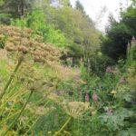 Le jardin alpin de l'Hort-de-Dieu
