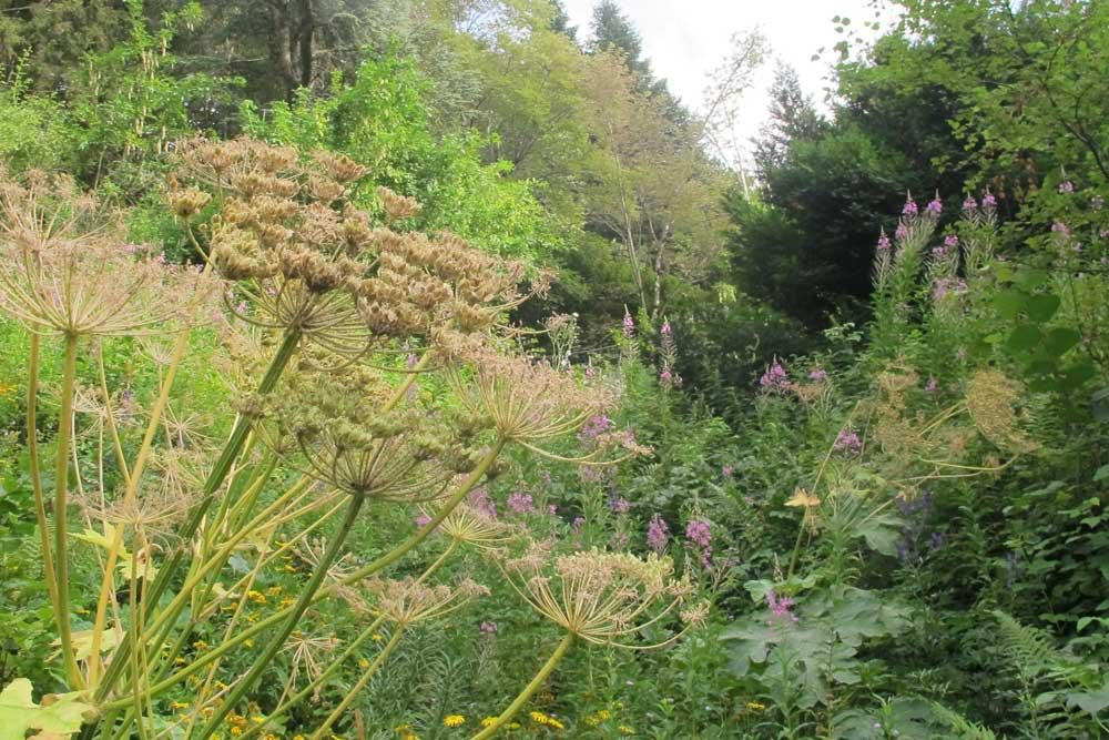 Le jardin alpin de l'Hort-de-Dieu créé par Charles Flahault