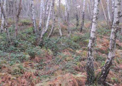 Forêt de bouleau vers le col Salidès