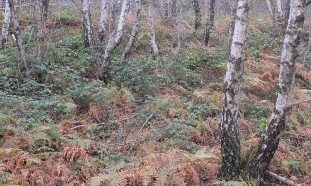 Protégé: Forêts autour du col du Salidès
