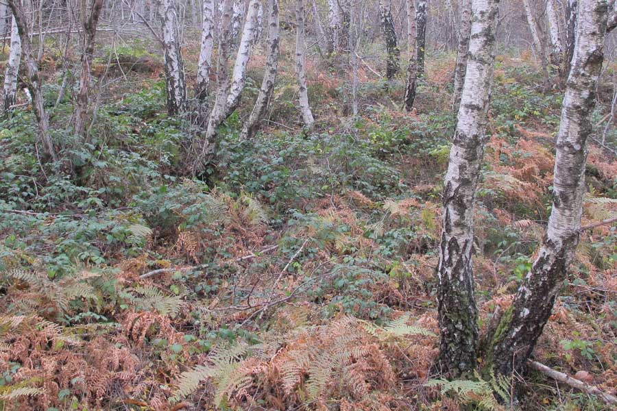 Forêts autour du col Salidès