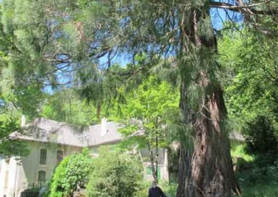 Maison forestière du Marquairès et son séquoia géant