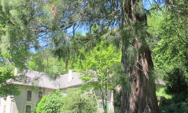 La forêt du Marquairès