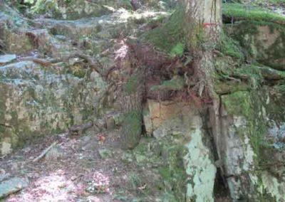 Arbre sur granite dans la forêt du Marquairès