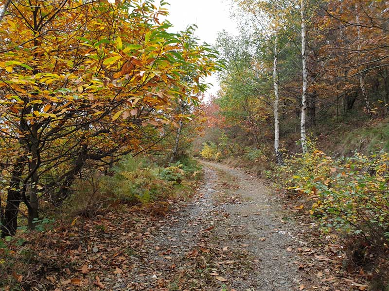 La forêt d'automne (photo Philippe Gaubert)