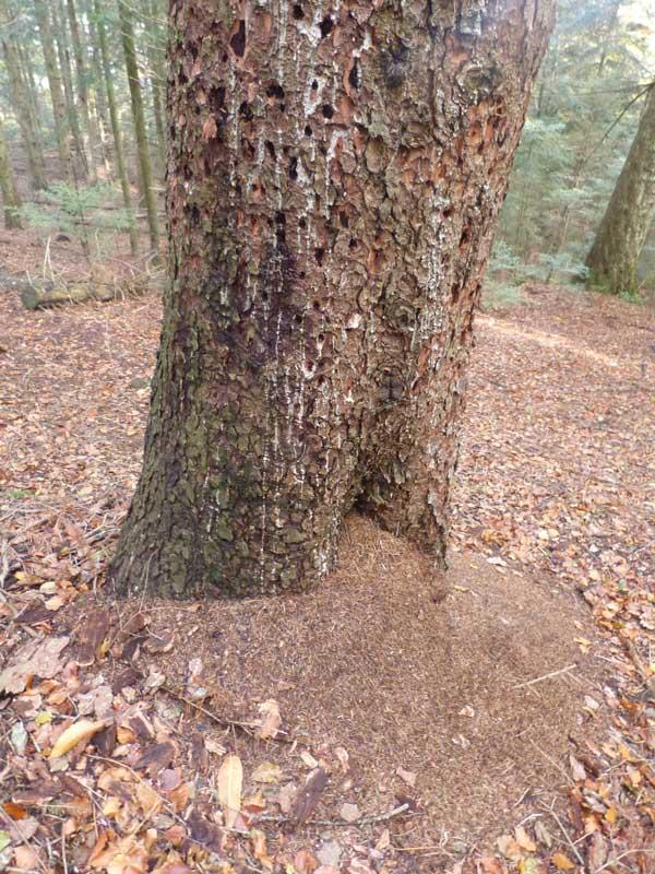 L'arbre à insectes (photo Florence Arnaud)