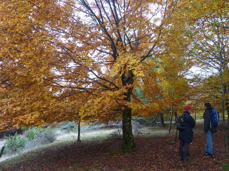 L'arbre (photo Georges Mattia)