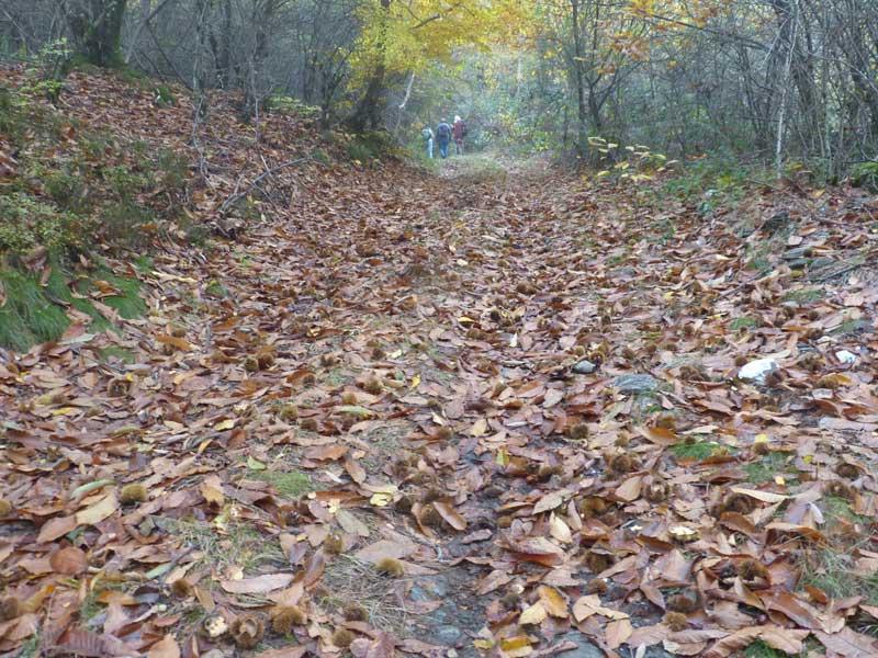 Les feuilles mortes (photo Georges Mattia)