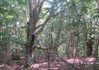 Réserve biologique intégrale de la hêtraie de la Brèze