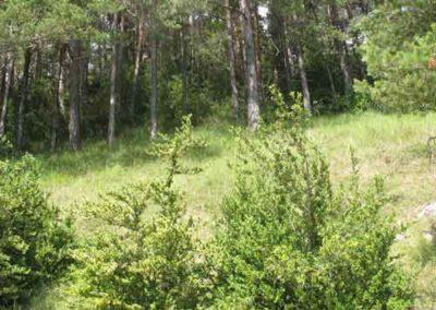 Buis et forêt mixte de feuillus et confères sur calcaire