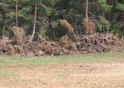 Le défrichement de la forêt : Arrachage pour créer des terres agricoles