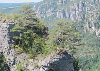Arbres sur les dolomies de Cassagnes à la Bourgarie (Causse Mejean)