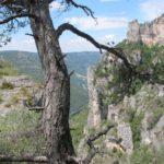 La forêt des Causses…Cassagnes – La Bourgarie