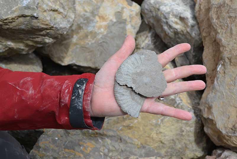 L'ammonite - Nîmes-le-Vieux (photo Marc Pougaud)