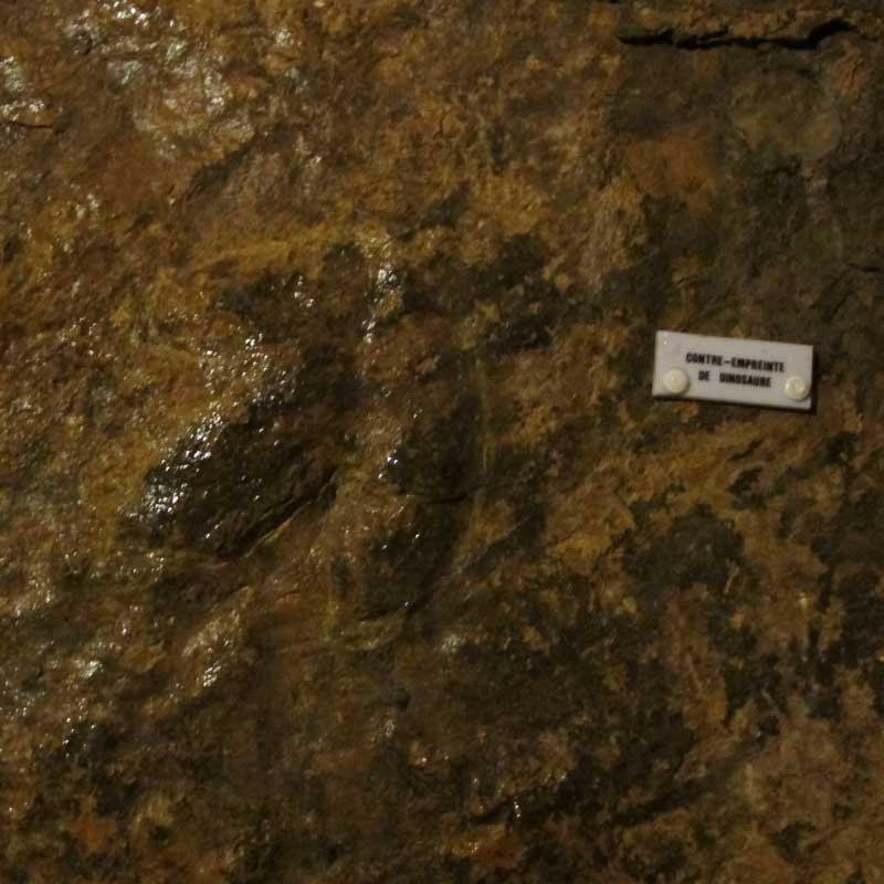 La contre-empreinte de dinosaure Bramabiau - Camprieu (photo Florence Arnaud)