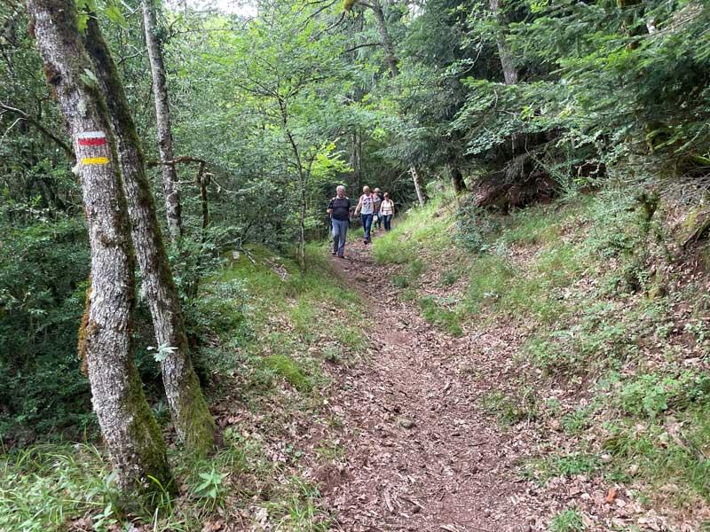 Retour dans la forêt - Camprieu (photo Florence Arnaud)