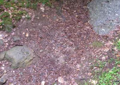 Limite grès-granite à Saint-Sauveur des Pourcils
