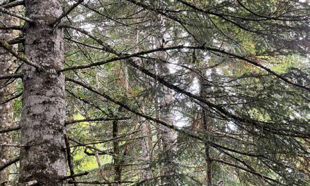 L'arboretum de Saint-Sauveur-des-Pourcils