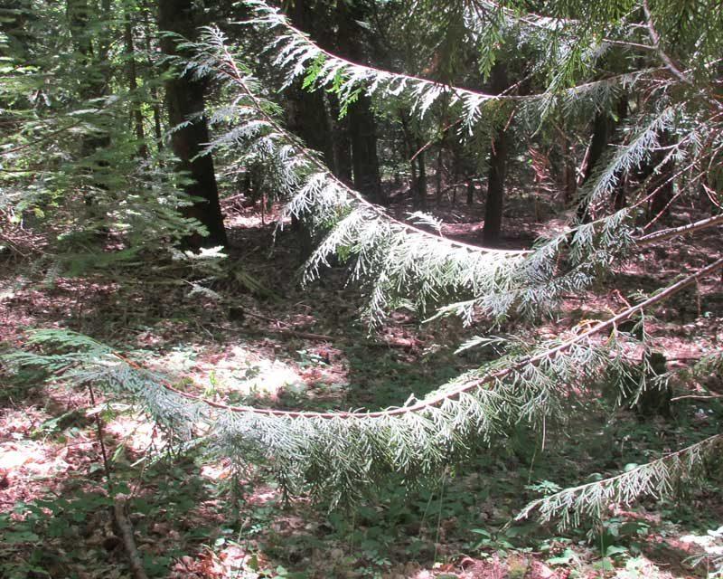 L'arboretum de la Foux