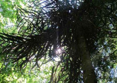 Désespoir des singes de l'arboretum de la Foux